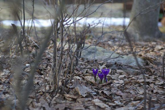 Peeps-of-spring