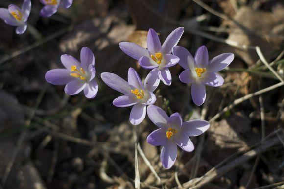 Peeps2-of-spring