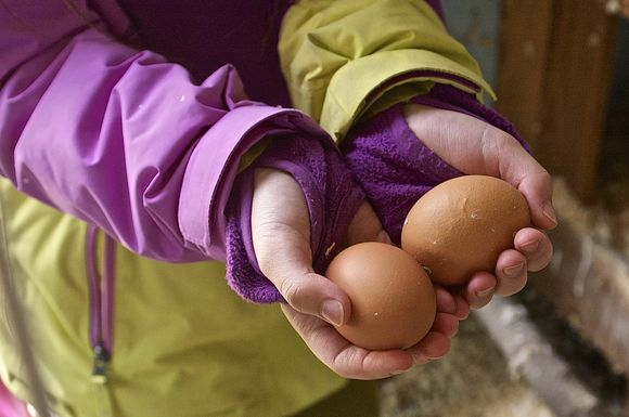 Eggs-in-hand