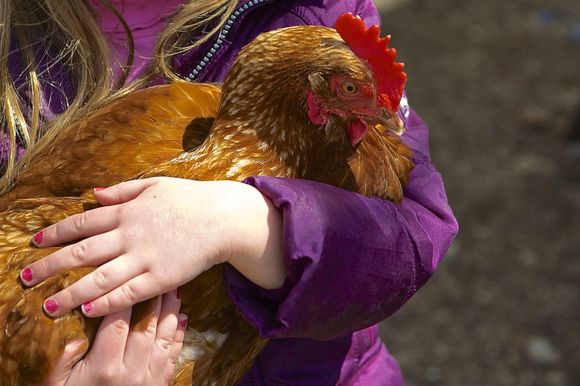 Chicken-in-arms2