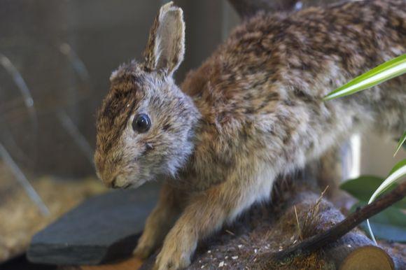Stuffed-rabbit
